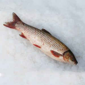 amoor-fish