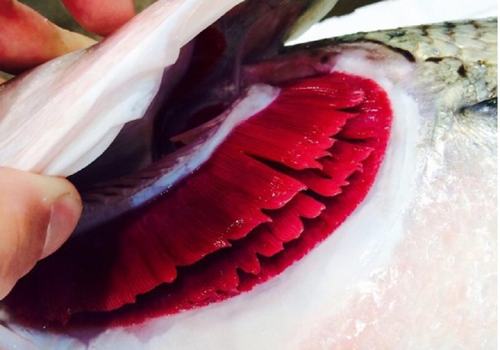 روش خرید ماهی تازه