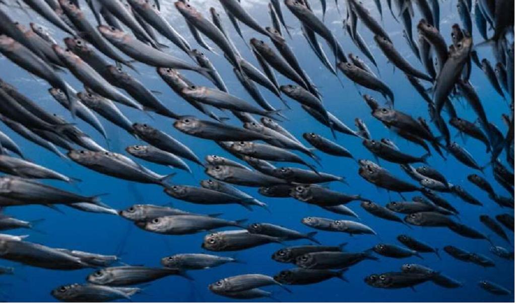 ماهیان آلوده به جیوه