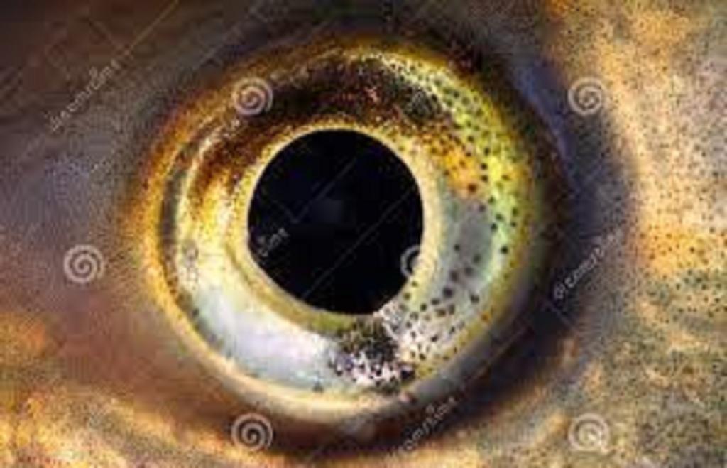 بینایی در ماهیان