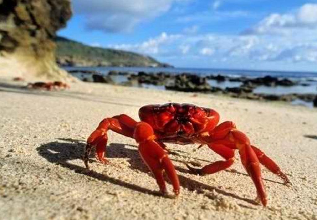 خرچنگ ها