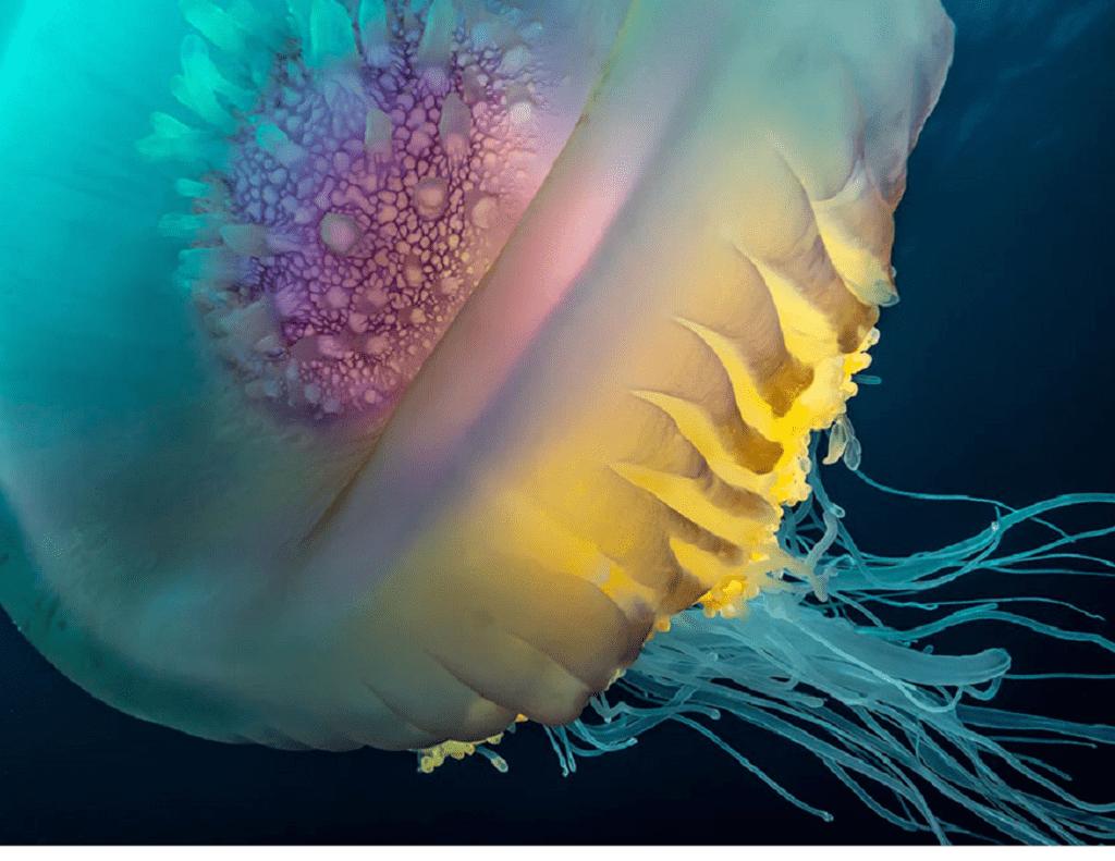 انواع عروس دریایی