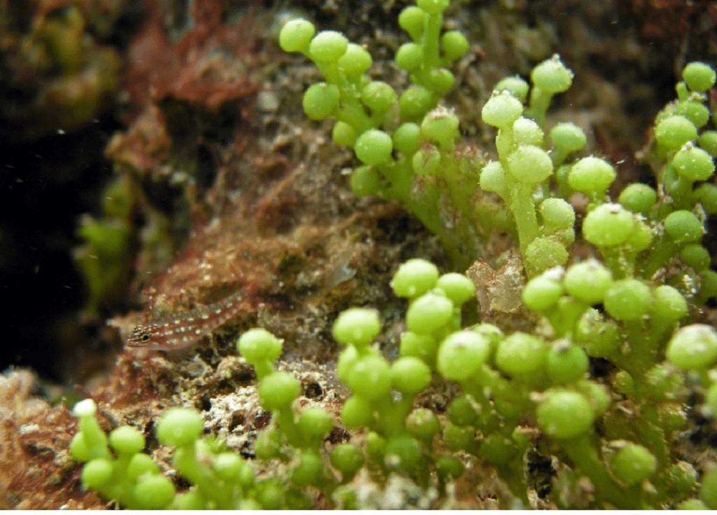 گیاهان دریایی