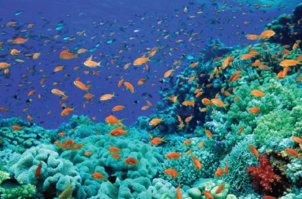اعماق اقیانوس ها