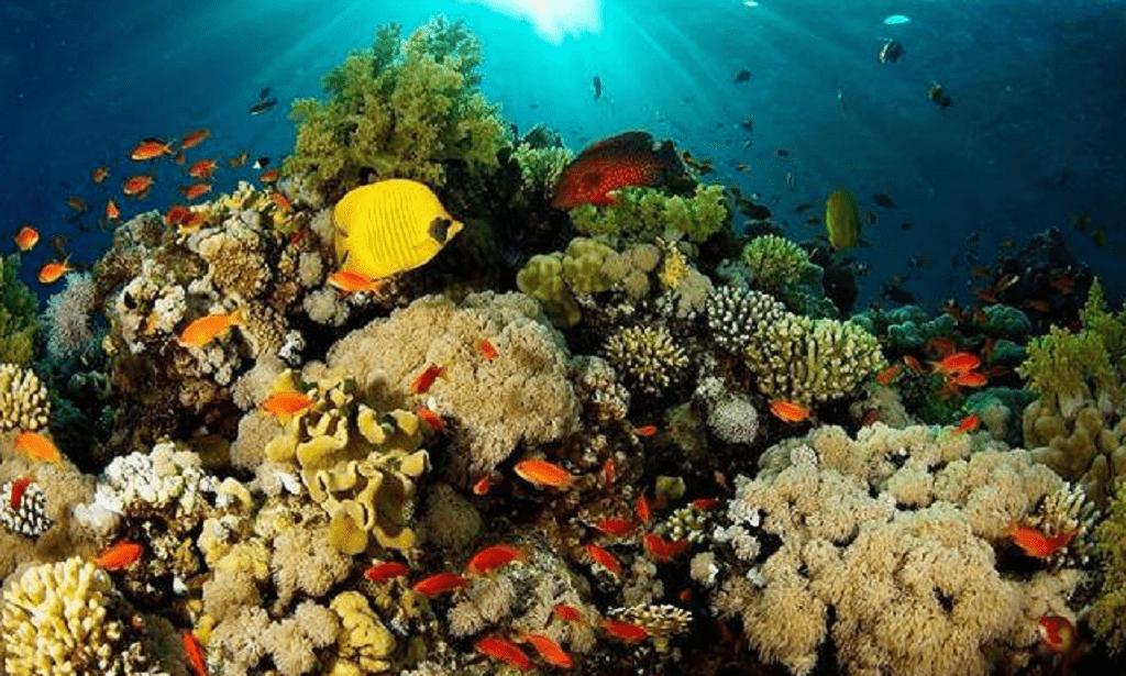 اسرار اعماق اقیانوس ها