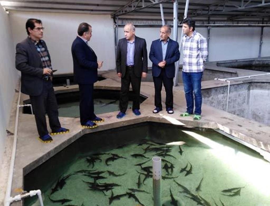 پرورش ماهیان خاویاری در قم