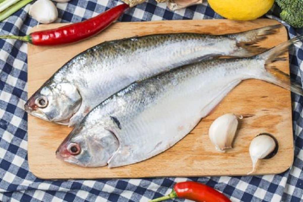 کدام ماهی بهتر است