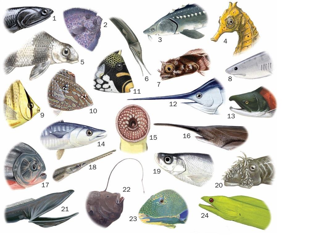 طبقه بندی ماهی ها