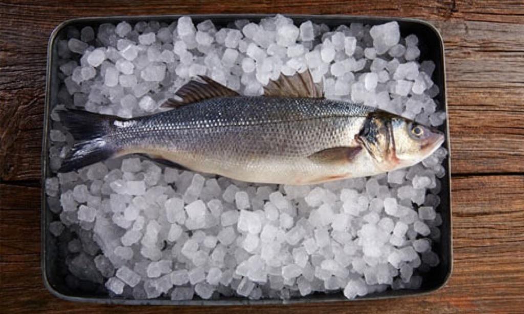 نگهداری ماهی