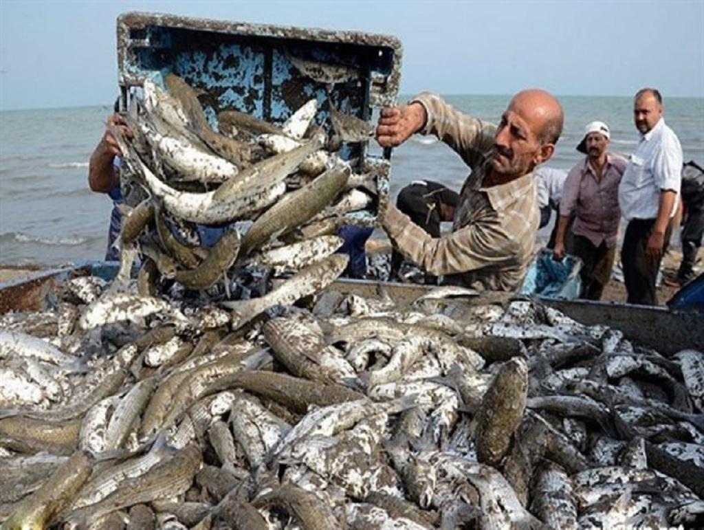 صید ماهی سفید